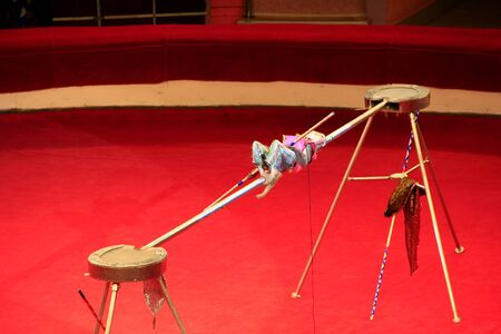 Trained monkey walking on rope with balance beam in circus. Amusing monkey performing in Comel circus
