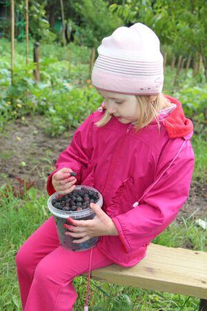 Little baby eating black raspberry berries. Ripe Rubus occidentalis in bucket. Child eating black raspberry and sitting on bench in garden. Little girl tasting black berry
