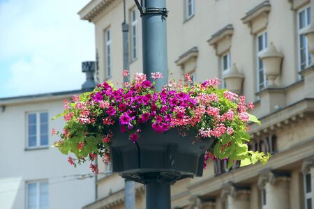 Flowers in hanging pot on background of urban buildings close up. Floral decoration at city street. Red and pink flowers in flowerpot hang on city pillar 스톡 콘텐츠