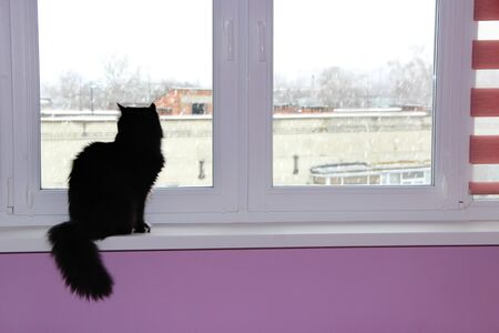 Cat sitting at window and looking out. Pet on window-sill. Domestic animal enjoying view from home window