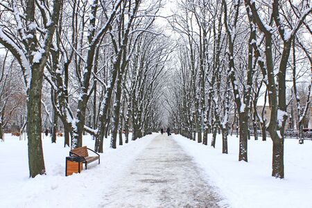 Beautiful park alley with bench and trees in winter sunny day. Beautiful park with promenade path and trees covered by snow. Empty city park in winter 스톡 콘텐츠