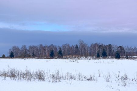 beautiful winter rural landscape. Winter rural landscape with blueish clouds above forest. Snowy field. Winter weather 스톡 콘텐츠