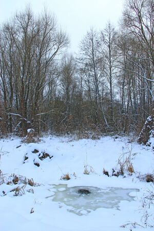 Beaver hole on rozen surface of river. Winter housing of toothed animal. Wildlife in winter. hole in ice for beaver on river in winter 스톡 콘텐츠