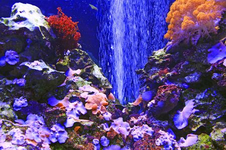 beautiful marine aquarium with fishes and corals. sea life under water. Seabed with coral and algae. Tropical sea. Marine bottom 스톡 콘텐츠