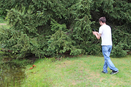 guy photographing squirrel in grass. Man making a photo of squirrel hiding in the spruce branches. Squirrel drinking water from pond in city park. Man making photo of red rodent on grass near pond