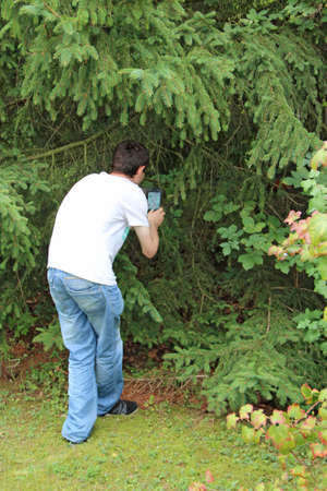 guy photographing squirrel in grass. Man making a photo of squirrel hiding between spruce branches. Squirrel living in city park. Man making photo of red rodent in green spruce branch Zdjęcie Seryjne