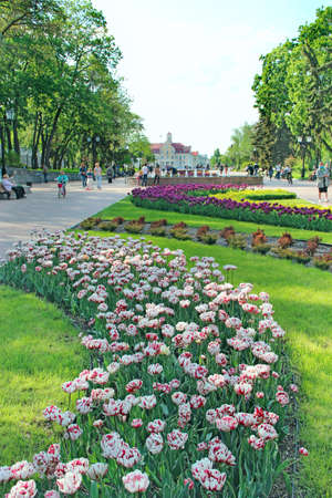 Spring park with blooming flower bed. People walk in city park in spring. Green trees and beautiful flower beds in park. People having a rest in city park with big trees. City landscaping