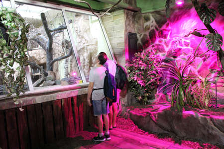 Tourists in terrarium are looking at animal behind glass. Zoo visitors look at animals. People look at animals at Lodz Zoo, in Poland