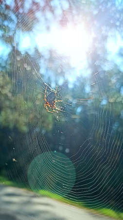 spider is basking in rays of sun. Spider sitting on web sunny rays. Sunlights in morning. Fauna of forest. Insect living in forest. Spider in cobweb. Arachnology
