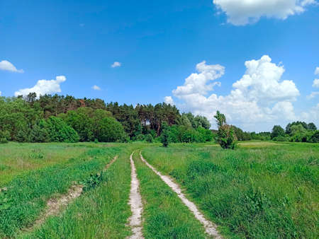Country road with field of green grass on roadsides. Small country way in summer. Greenery growing on roadside of country road
