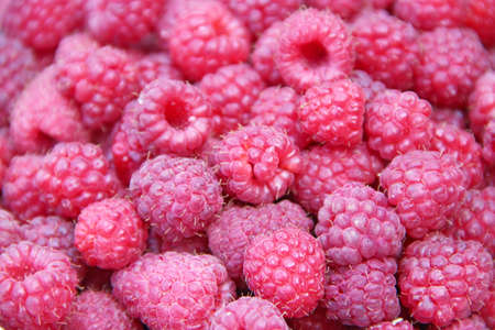 Red berries of raspberry in heap. Pile of ripe berries close up. Tasty and useful red raspberry. Rich crop of red raspberries