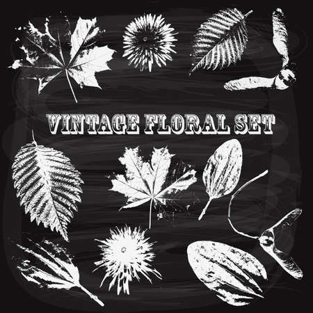 poplar: Vector Vintage Style Floral Elements drawn by chalk on the blackboard, rosewood std font