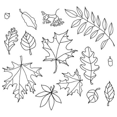 doodle autumn leafs on the white background