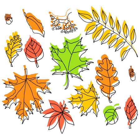 doodle color autumn leafs on the white background