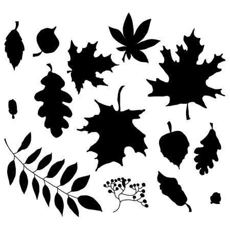doodle black autumn leafs on the white background