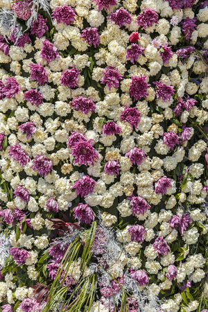 Installation of cloves and chrysanthemums on a flower festival in Baku
