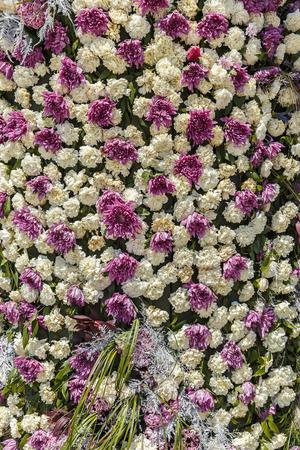 festiva: Installation of cloves and chrysanthemums on a flower festival in Baku