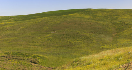 tending: A shepherd tending a flock of sheep in the mountains of Gobustan(Azerbaijan) Stock Photo