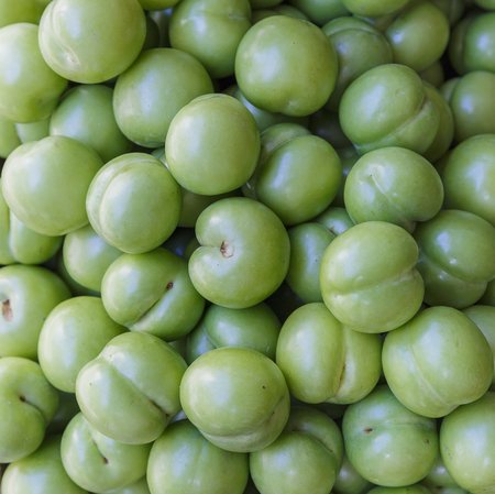 collected: Freshly collected green plums Stock Photo