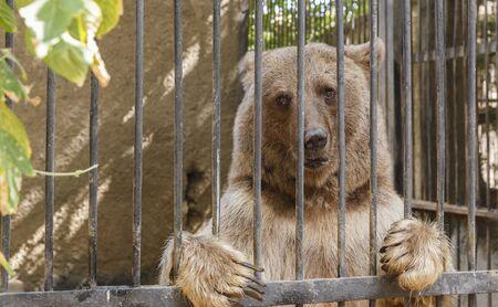 behind bars: Bear posing behind bars in a zoo Stock Photo