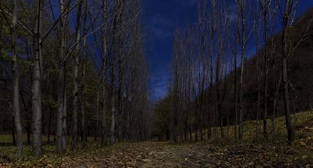woodland  horror: Forest moonlit.Vandam.Gabala.Azerbaijan