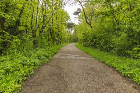 The path to the castle of Liechtenstein in Vienna.Vienna woods Stock Photo