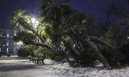 a blizzard: Snow blizzard in Baku.Azerbaijan