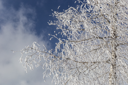 Frozen tree branches Stok Fotoğraf - 115312840