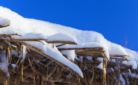 Snow-covered arbors in the winter forest