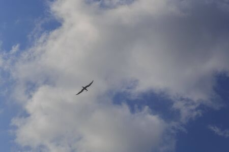 A seagull carrying a fish in its beak against the sky with clouds Banco de Imagens