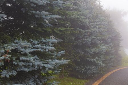 All sorts of Christmas trees growing along the road