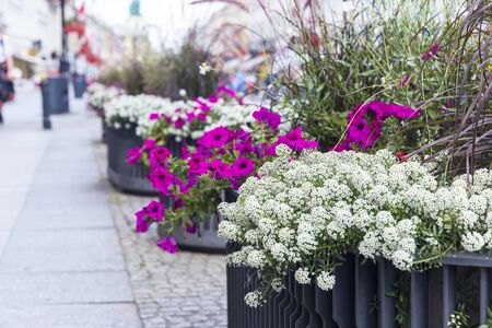 Flowerbeds with different flowers on the street