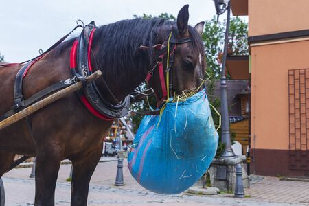 Horse chewing hay from a bag hung on it