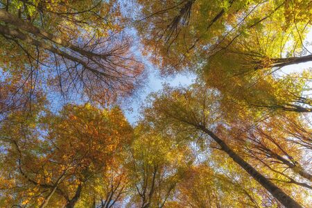 Autumn trees in the forest. Top to bottom view. 版權商用圖片