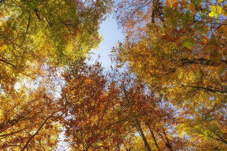 Autumn trees in the forest. Top to bottom view. Archivio Fotografico - 132247232