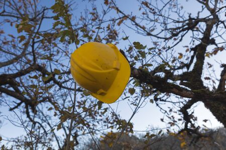 Yellow work helmet hanging on a tree