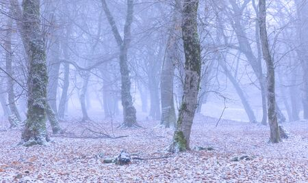 Snow covered forest in fog Banco de Imagens