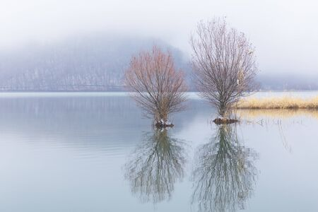 Trees growing in a lake in frosty weather