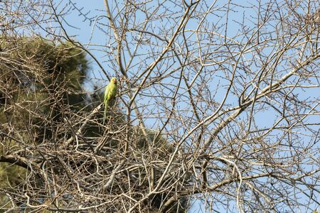 Parrot sitting on a tree in a city park