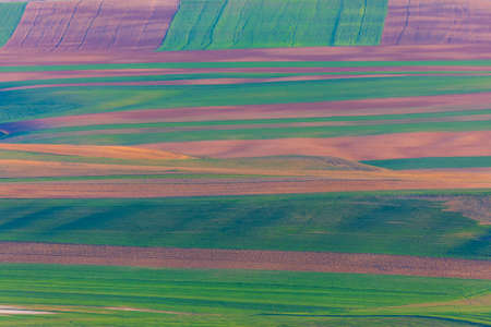 Plowed fields in spring with a condensed perspective