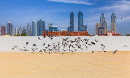 Seagulls flying against the background of Dubai skyscrapers Фото со стока