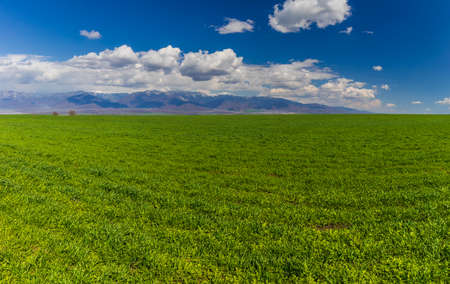 Green field against the background of snow-capped mountains