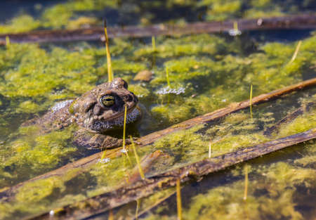frog sticking his head out of the lake water