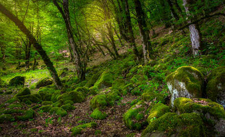 Many stones covered with moss lying in the forest