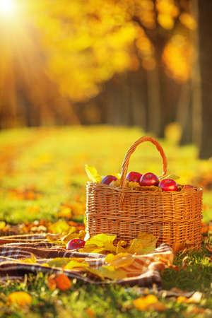 屋外で日差し逆光秋に黄色と赤のジューシーな有機リンゴの完全なバスケットを残します。秋のりんごの収穫。