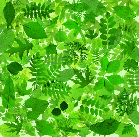 Beautiful abstract green leaves environmental nature background