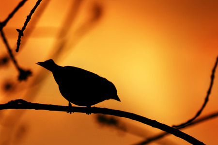 Lonely bird silhouette on a branch in sunset colors