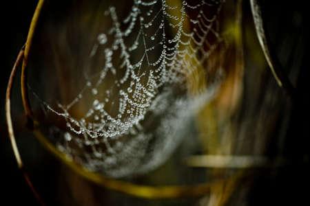 spiderweb: Spider-web little world