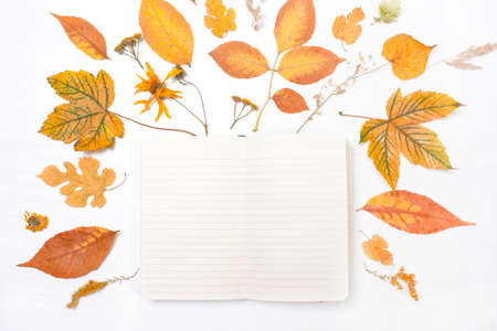 yellow notepad: Notepad in the frame of yellow leaves and flowers. Autumn composition. Top view, flat