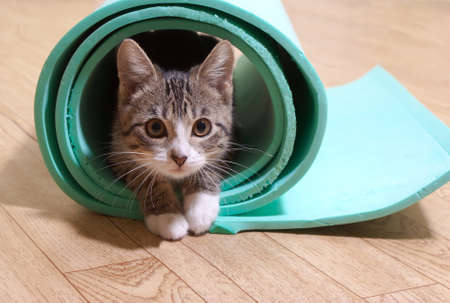 Kitten sitting on a yoga mat. The cat is on the mat for yoga, fitness Standard-Bild